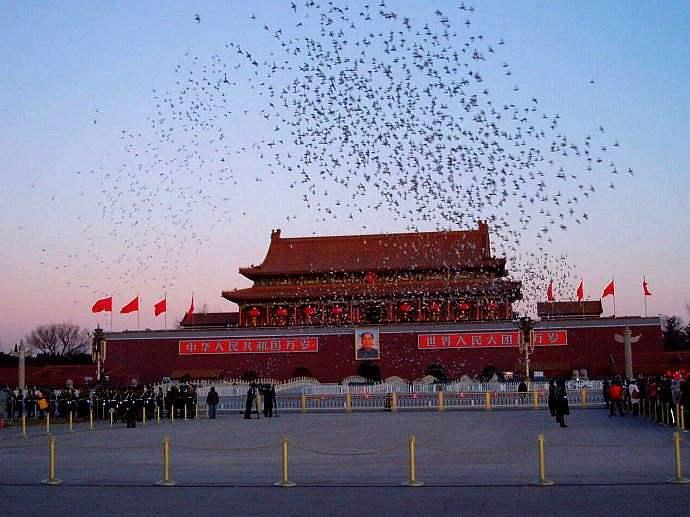 """国庆,阅兵式上放飞的几万只""""和平鸽""""和气球最后飞到哪了?"""