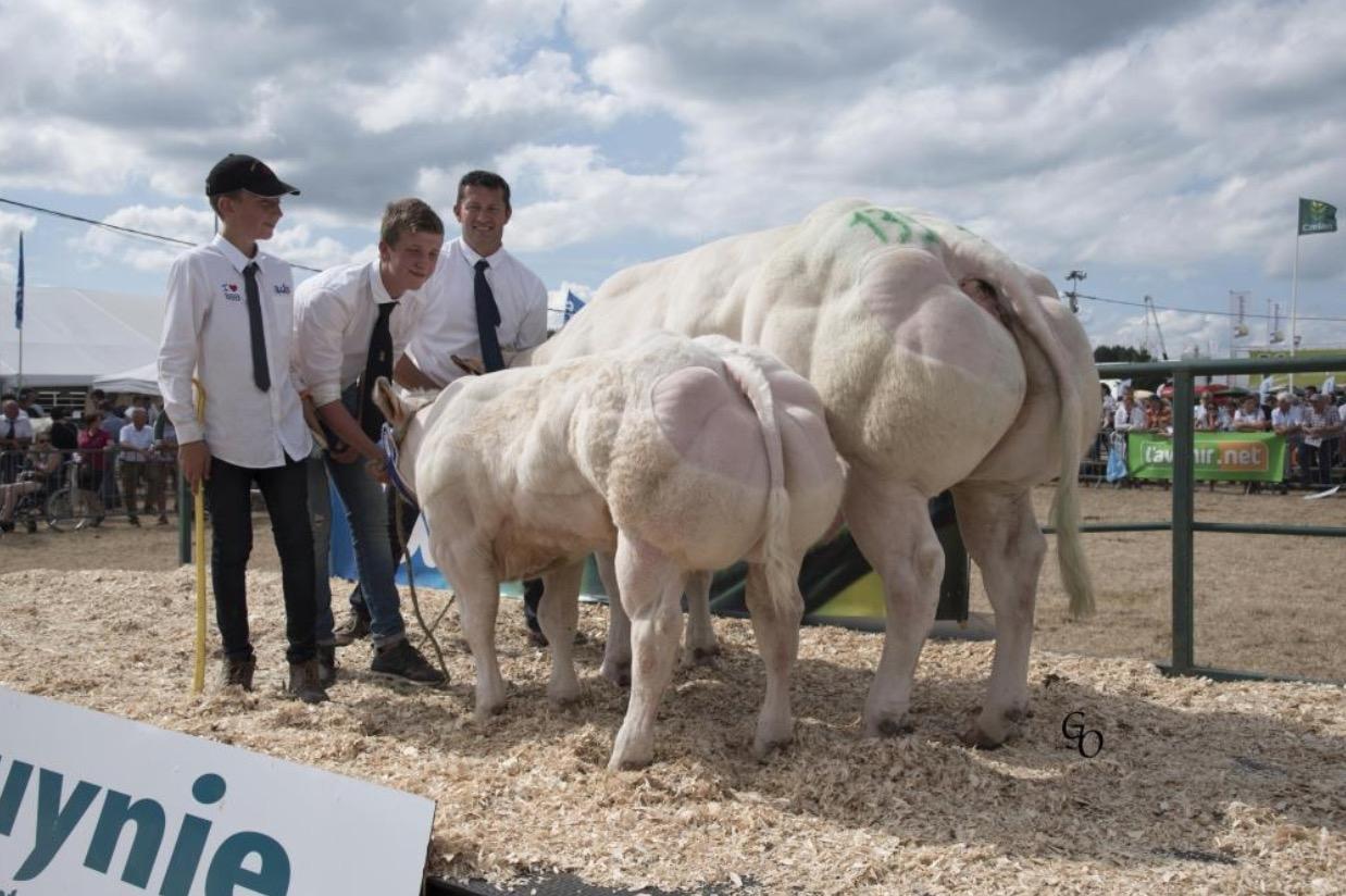 蓝牛健美大赛冠军诞生:第一名体重1.33吨成为牛王!