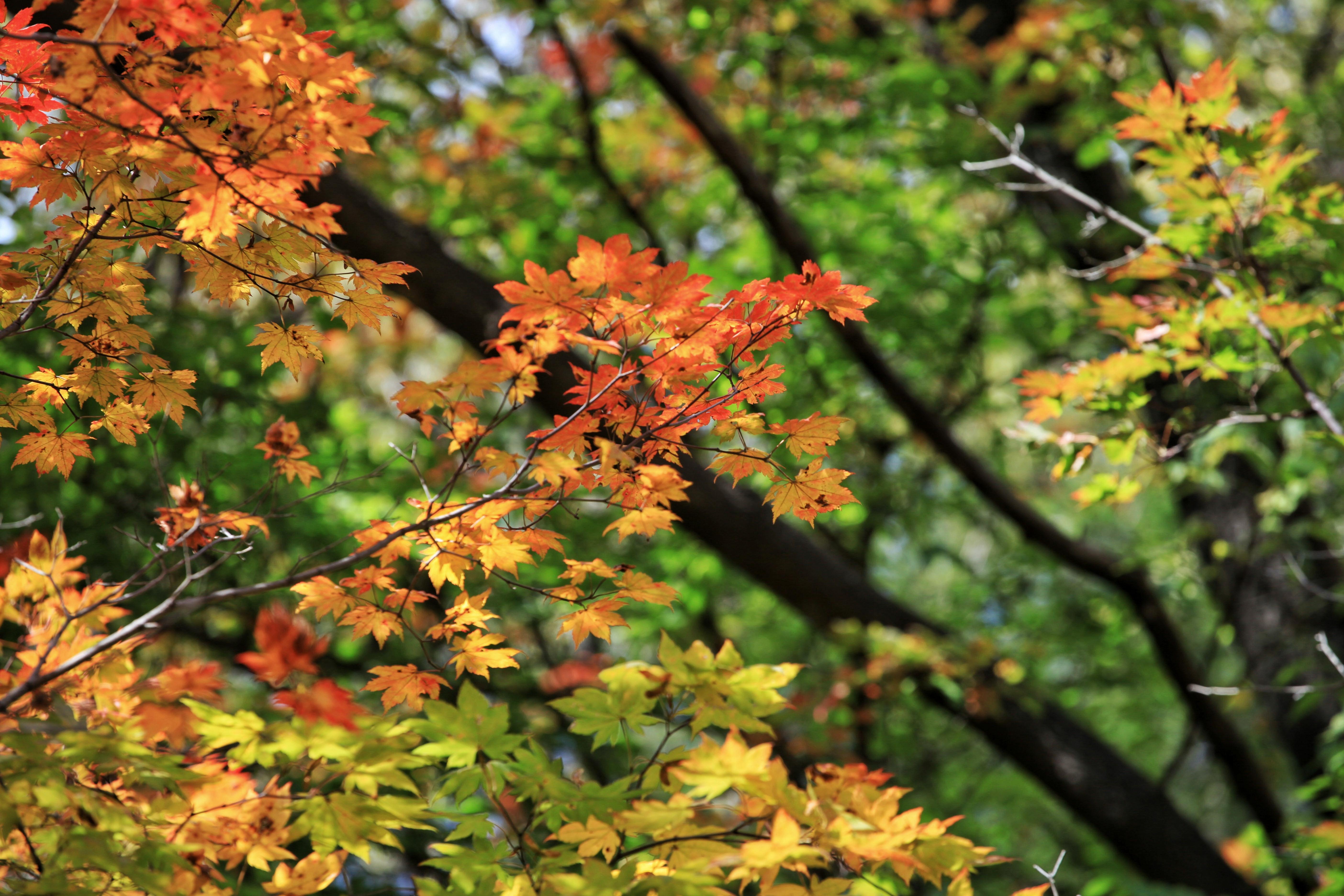 辽东私藏个大石湖,炫彩的秋色堪比九寨沟