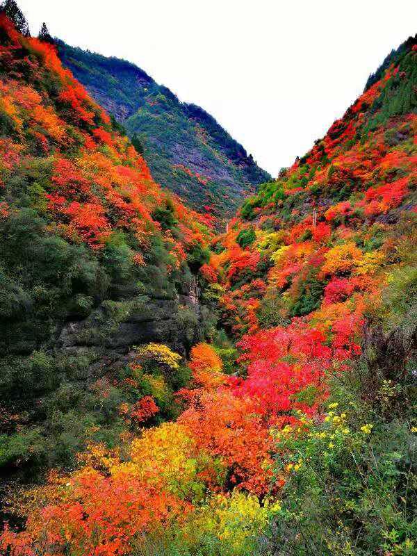 凤县灵官峡景区红叶旅游观赏节开幕啦!这里的红叶美醉了!