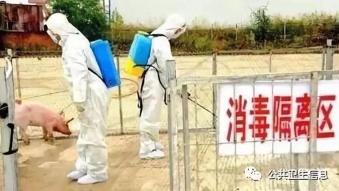 吉林松原发生非洲猪瘟疫情