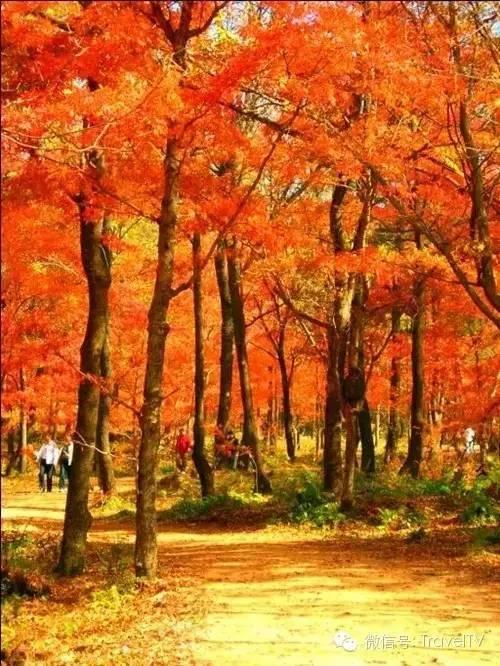 这才是10月中国最美的10个秋景圣地