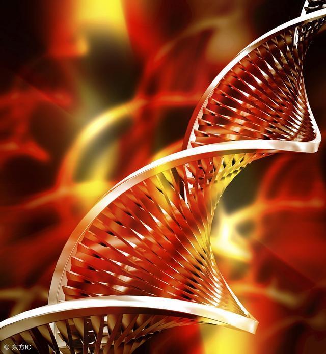 Science揭秘:运动可以促进大脑神经再生,延缓老年痴呆