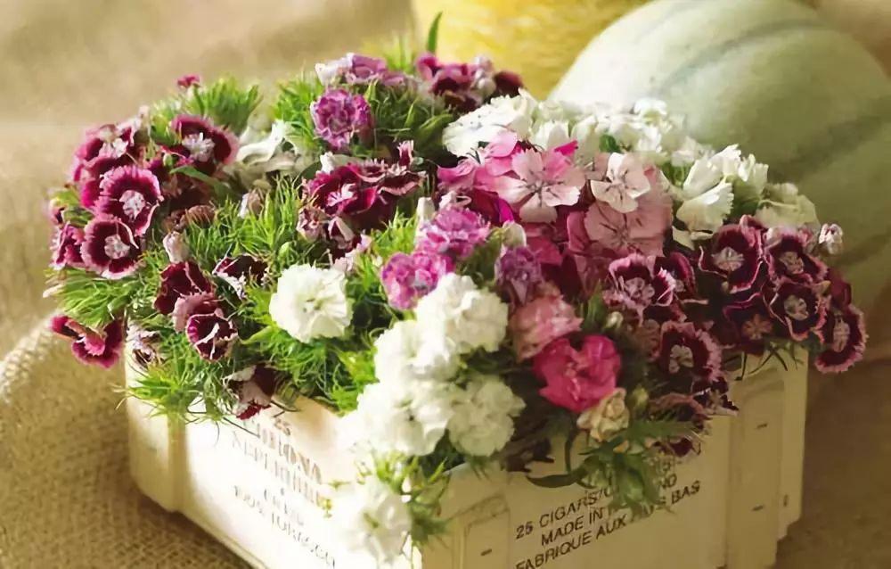 鲜花锦簇 壁纸50,鲜花锦簇,动物壁纸   鲜花锦簇 壁纸50