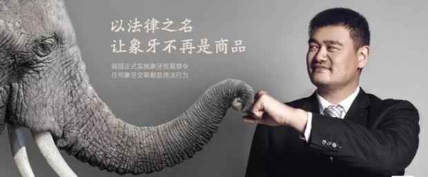 中国人不再迷恋象牙了!美媒:中国全面禁贸象牙发挥积极作用