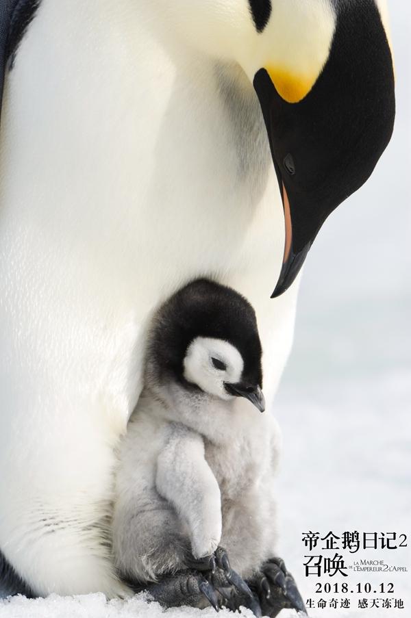 《帝企鹅日记2》终极海报、预告双发 张歆艺惊喜配