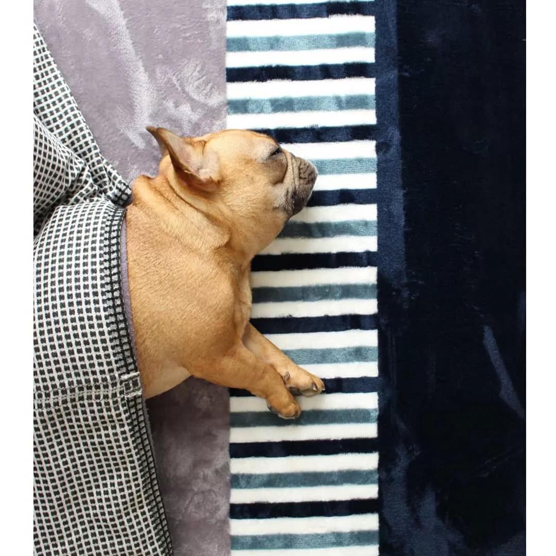 原创 还记得当初你为什么养宠物狗吗?始于冲动终于责任!