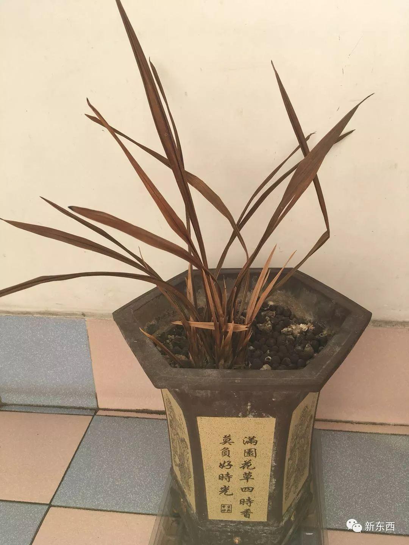 [黄石诗坛]姚寿安的诗《我最钟爱的兰草花》_ 阳台图片
