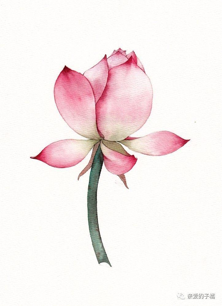 水彩花卉视频教程 | 莲·之一