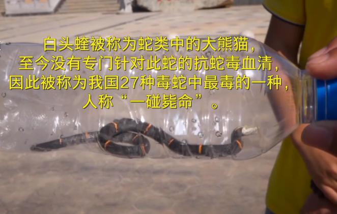 男子捞起池里的蛇,没人认识就报了警,民警却称他很幸运