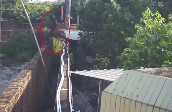 3男子翻墙盗走院中马蜂窝,屋主看完监控,却不报警