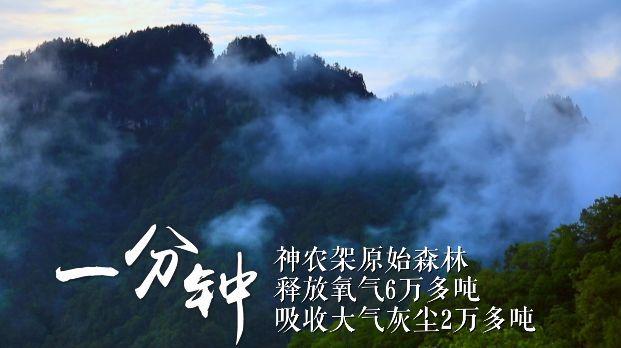 一分钟,神农架原始森林释氧6万多吨图片