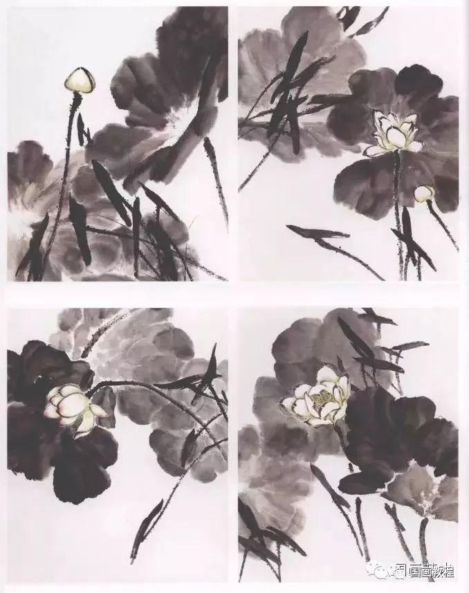 与夏荷不同的是,秋日的荷花已经开始调谢,其特征为花瓣脱落,荷叶亦图片