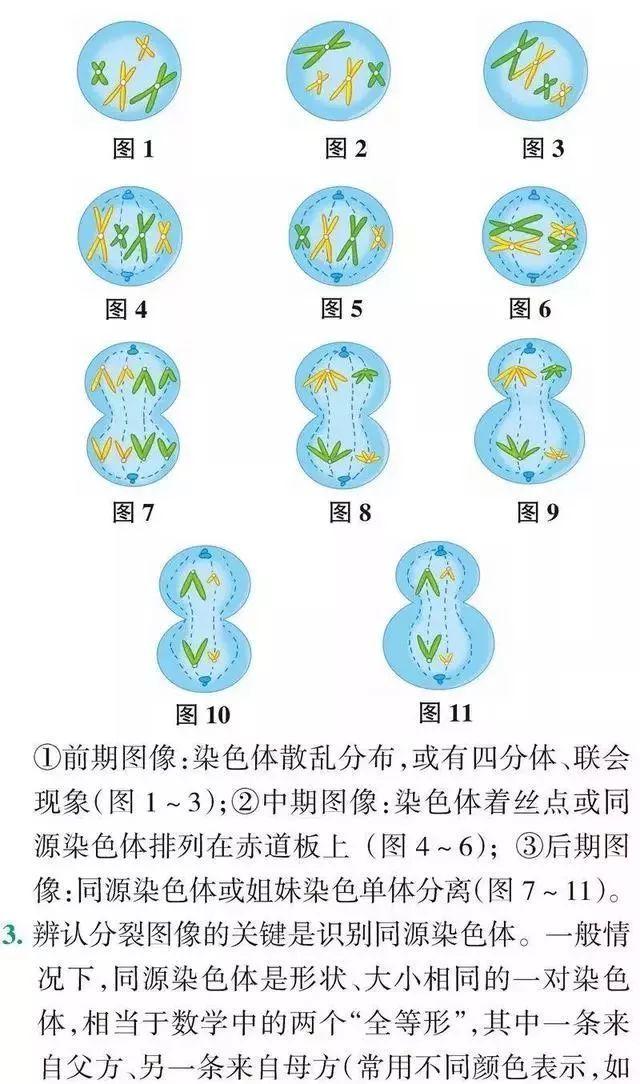 高中生物的9個題型技巧解析