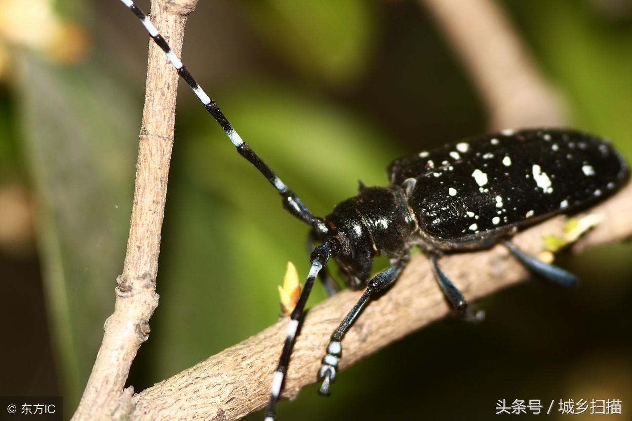 这9种常见昆虫,是农村儿童喜欢的 玩具 ,你小时候玩过几种