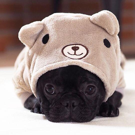 原创 入秋温差大!5招帮你的宠物狗狗预防感冒!