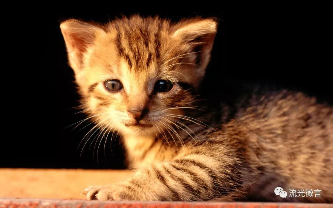 猫与尾巷,一段熟悉又陌生的时光