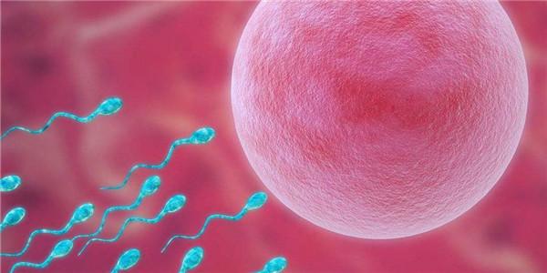 复旦精子库捐精合格率不到10%?论一颗优秀精子的养成