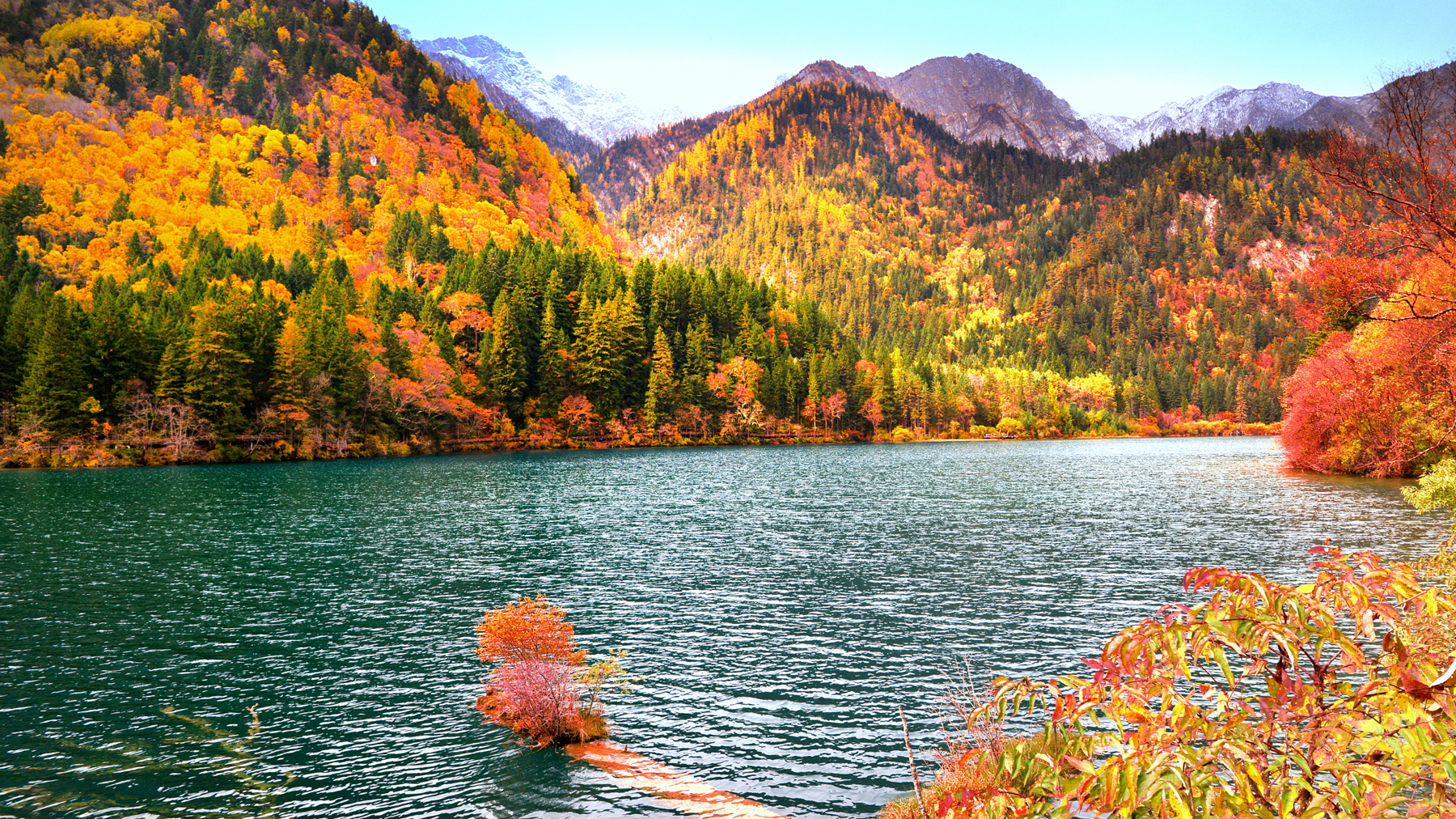 2、黑水奶子沟 黑水县境内的达古冰川景区,雪顶红叶,相映生辉,美不胜收。卡龙沟的红叶绝对要和卡龙沟的水放在一起才算惊艳,景区比较幽静,是个思考人生的好去处。  奶子沟不是一个景区,而是一条沟,开车一路都是漫山的红叶,景色非常的原始。在满山遍野的彩林里面散步,空气又清新,没有?#23548;?#30340;游客,彩林洋洋洒洒长达八十里,蔚为壮观。  3、?#22659;?#20122;丁 ?#22659;?#20122;丁最美的时候是每年的10月15-25日。每到秋季,山层林尽?#33606;?#28779;红的枫叶、交相辉映,太阳升起时,整座山泛着金光。站在山顶,可远眺贡嘎日松贡布神山,景色十分壮观。不过