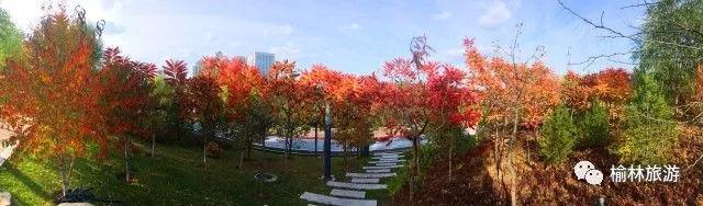 榆林城区不花钱的赏秋攻略!红叶、芦苇、胡杨林……