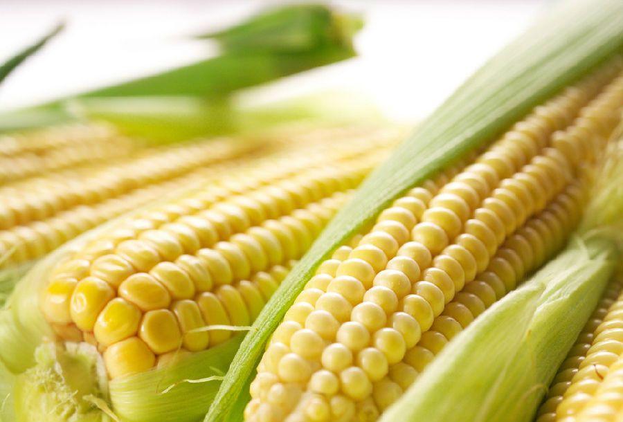 月经期间吃什么菜减肥图片