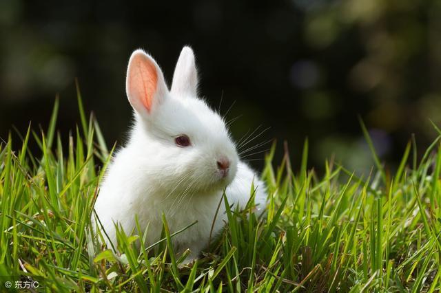 累了,就回家看看等你的小白兔_大白兔