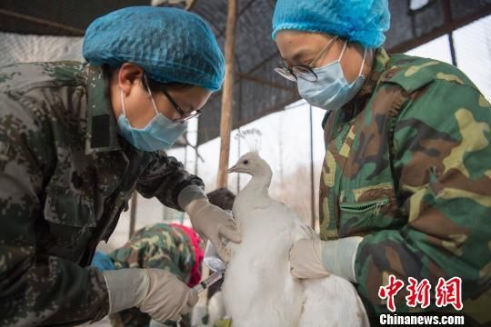 ag电子经验心得:湖南凤凰发生H5N6禽流感疫情_官方称已有效控制