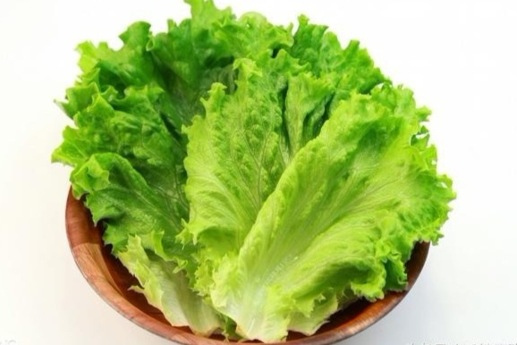 球形的包心生菜和叶片皱褶的奶油生菜(花叶生菜).图片