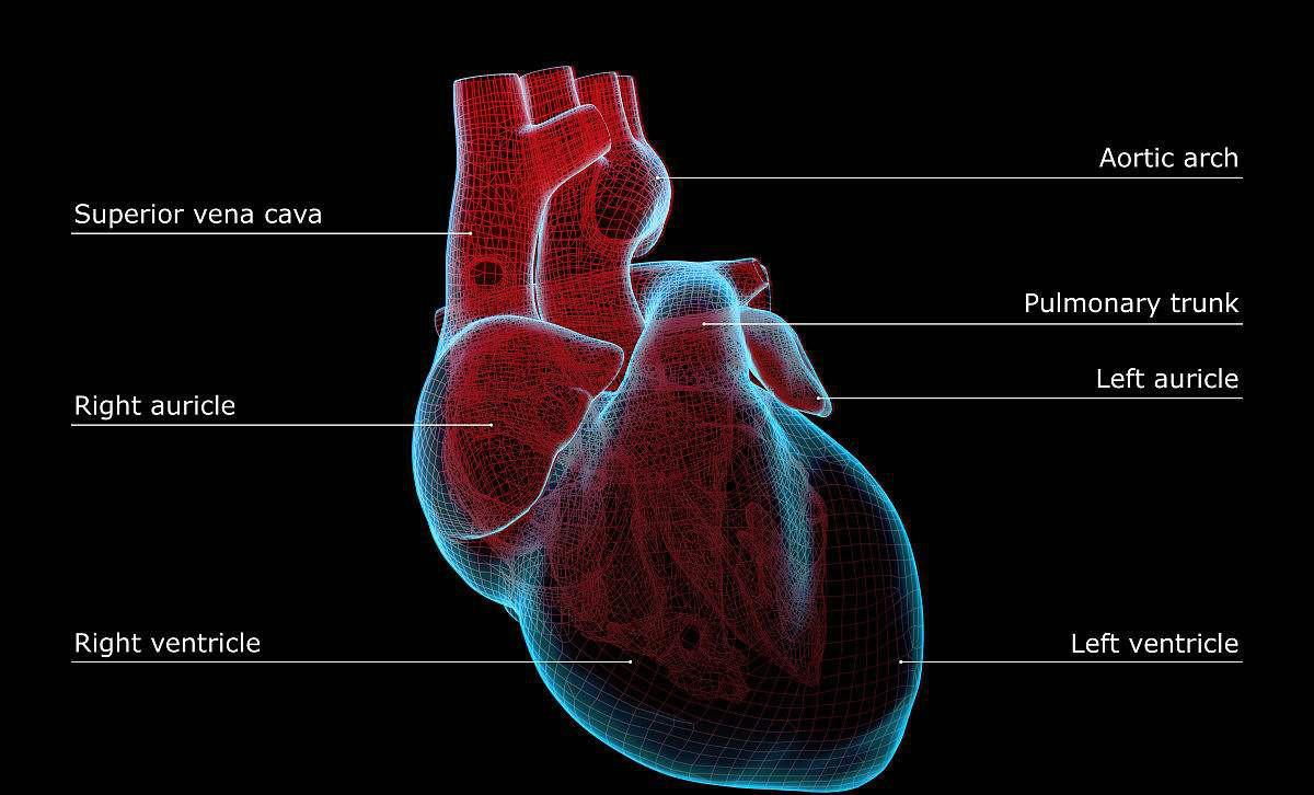 60岁老太剧烈胸痛,家属拒绝植入心脏支架,怒骂医生没有医德!