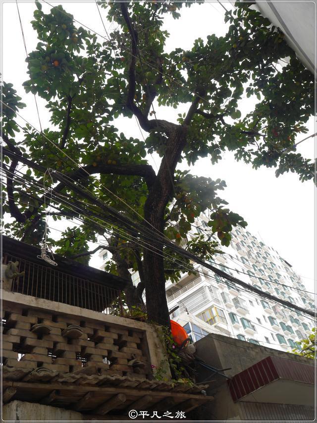 实拍舟曲城中村,家家种有柿子树,大门为啥歪着开?
