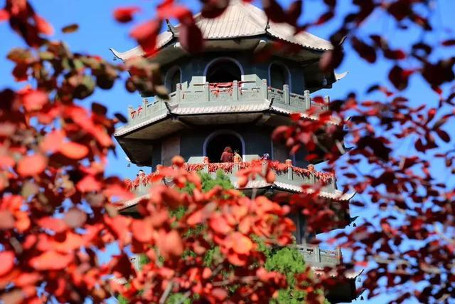 济南红叶谷红叶进入最佳观赏期