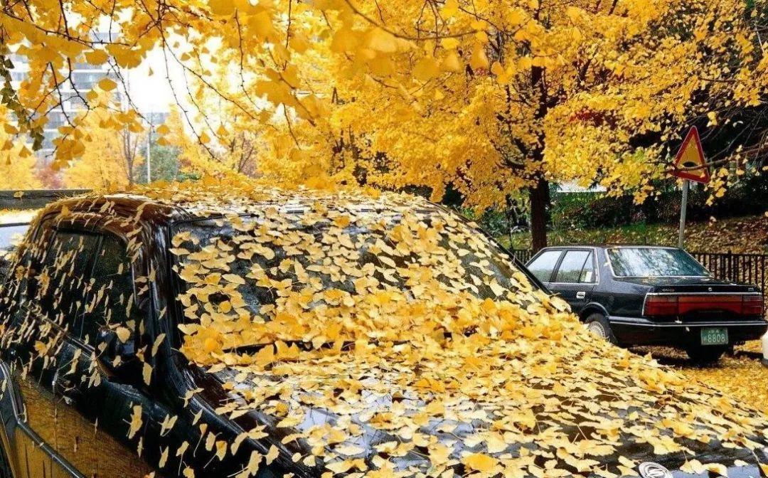 【宇艳车业】秋天落叶季 这些看不到的孔一旦堵塞简直图片
