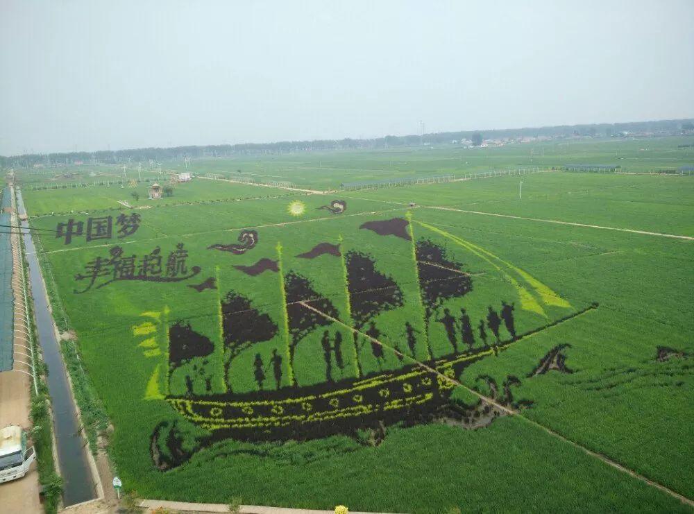 通大人的中国梦,他竟然用水稻种出了大熊猫 | 通大秘闻
