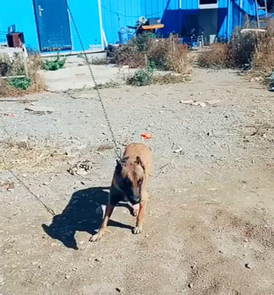 種類 大型 犬