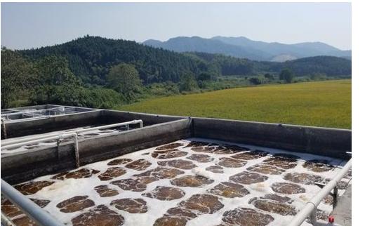 甘度环保污水处理菌种投放厌氧池、好氧池、缺氧池使用方法