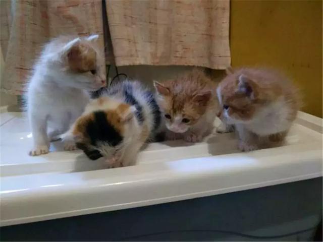 小猫断奶后生病离世,猫妈妈充满了悲伤,三种原因导致小猫患病!