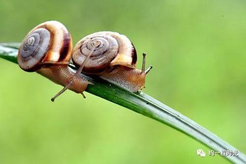 公益蜗牛探索观察正文,我a公益的通过,只要你用心观察勇于发现,就魔兽世界水蚊子哪里买图片