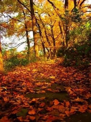 徒步皖南绝美古道,每一步都能踏出绚烂的秋色和人生感悟!
