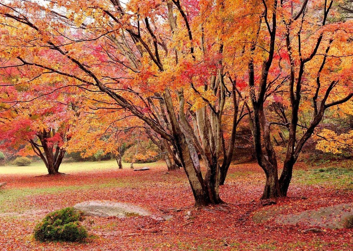 中国最美的20个秋景:观腾冲银杏黄,岳麓山层林尽染,桂林稻谷香