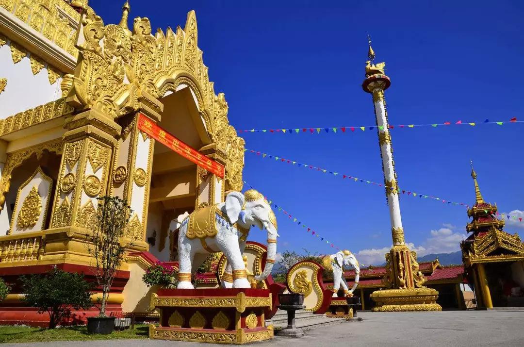 云南腾冲的古银杏村到了一年中最美的时候,错过就是遗憾