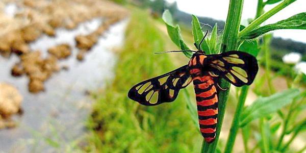 美军方投资研发转基因昆虫,专家担心或成为生物武器