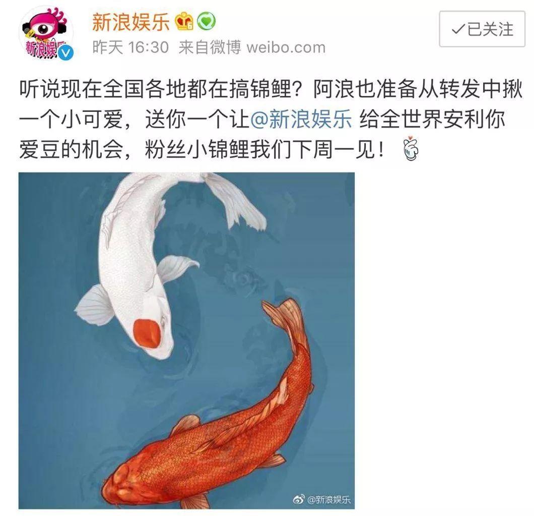 锦鲤 热词 热图7