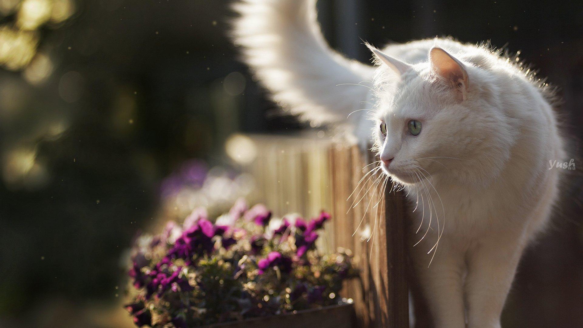 猫咪体内寄生虫的种类、感染途径以及体内驱虫的方... _新浪博客