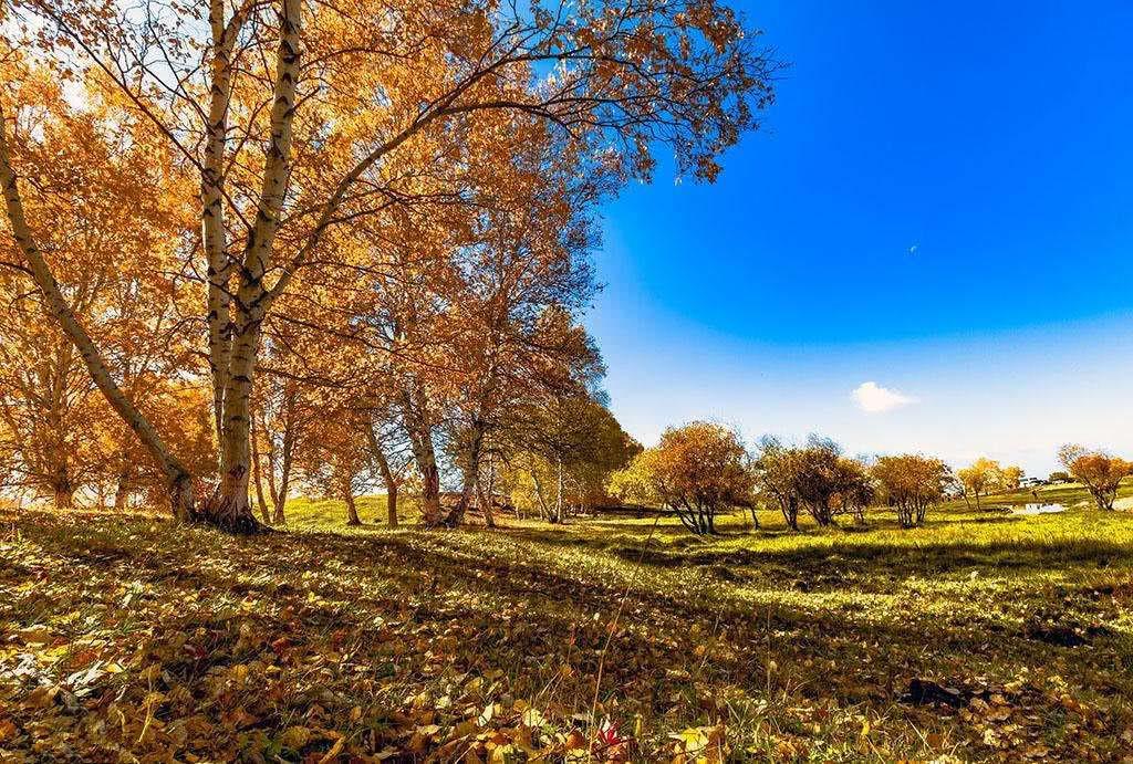 秋季最美的十條自駕線路