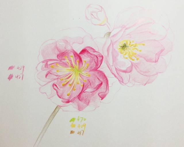 彩铅课程278 十五分钟学会画彩铅樱花