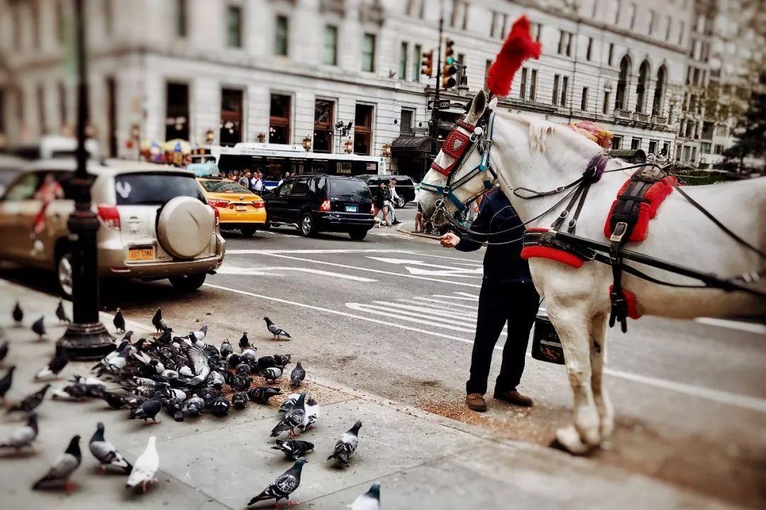 人与动物求种子_旅游 正文  没有任何人和动物会在纽约显得怪异或者格格不入.