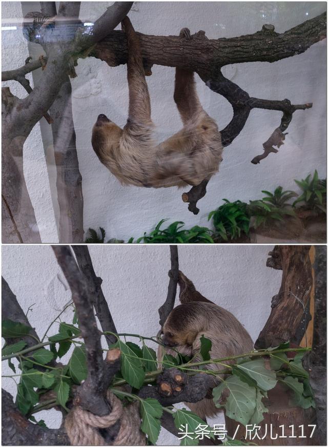 树懒爬行_北京大兴野生动物园包车一日游亲子游玩好去处_鸵鸟