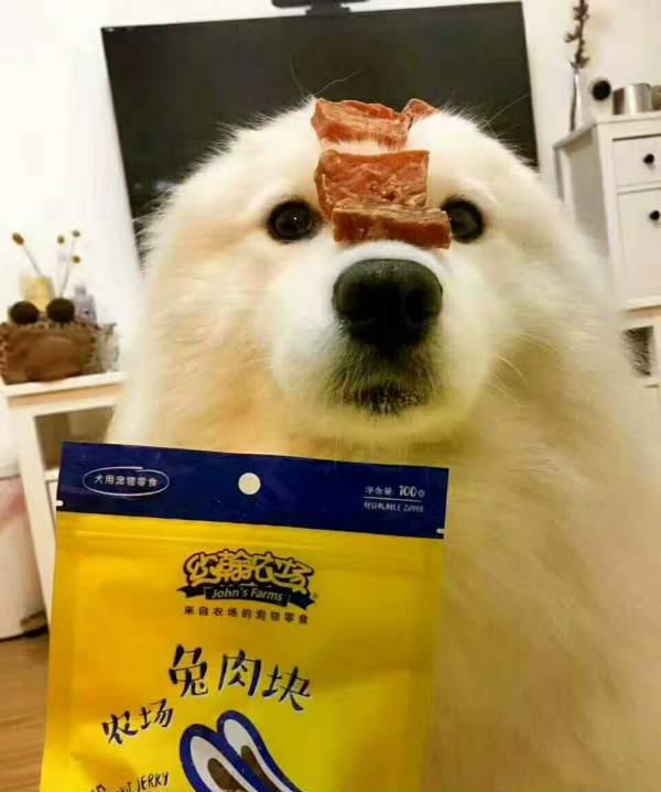 四川快乐12 有毒宠物零食全面介绍,这几种食物宠物食