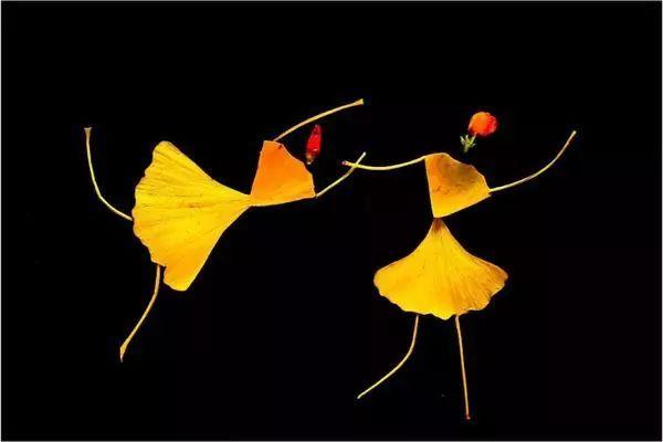 银杏叶组成女孩的躯干,胳膊和腿就是银杏叶的叶梗,头部则用银杏叶或者图片