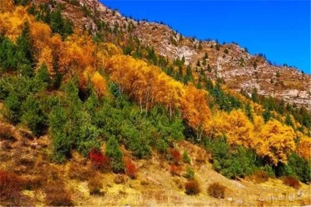 有一種愛叫重陽節陪家人登高賞麥秀國家森林公園之金秋